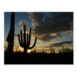Saguaro Sunset II Arizona Desert Landscape Postcard