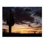 Saguaro Sunset III Arizona Landscape Postcard