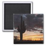 Saguaro Sunset Magnet