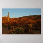 Saguaro Sunset Poster Print