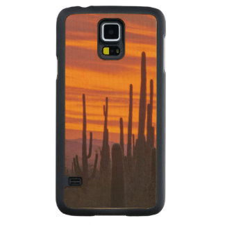 Saguaro, sunset, Saguaro National Park Carved® Maple Galaxy S5 Slim Case