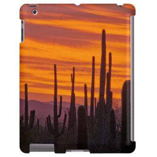 Saguaro, sunset, Saguaro National Park
