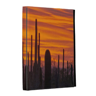 Saguaro, sunset, Saguaro National Park iPad Cases