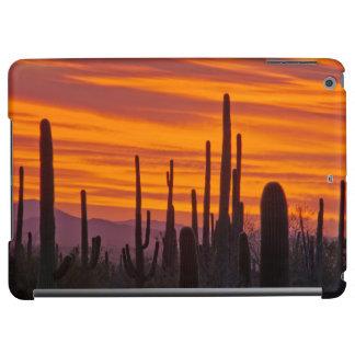 Saguaro, sunset, Saguaro National Park iPad Air Cases