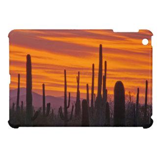 Saguaro, sunset, Saguaro National Park iPad Mini Covers