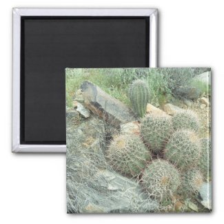 Saguaro Swirl Cactus Refrigerator Gift Magnet