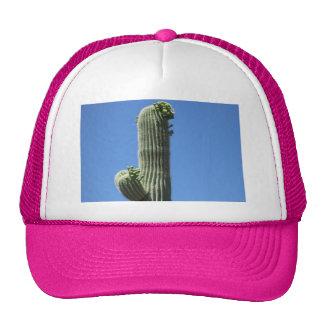 Saguaro Top Trucker Hat