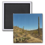 Saguaro's Carillo Trail in Saguaro National Park Magnet