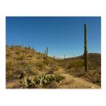 Saguaro's Carillo Trail in Saguaro National Park Postcard