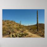 Saguaro's Carillo Trail in Saguaro National Park Poster