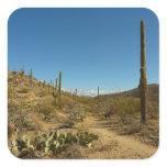 Saguaro's Carillo Trail in Saguaro National Park Square Sticker