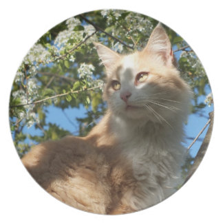 Sahara Cat In A Tree Collector Plate