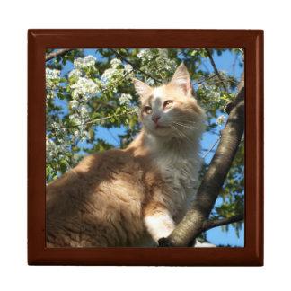 Sahara Cat In A Tree Keepsake/Jewelry Box