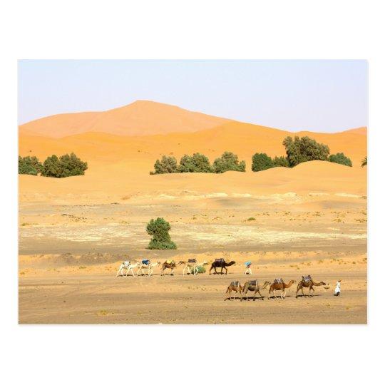 Sahara Desert - Camels and Erg Chebbi Postcard