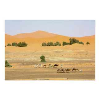 Sahara Desert - Camels and Erg Chebbi Poster