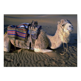 Sahara Desert near Merzouga, Morocco Greeting Card