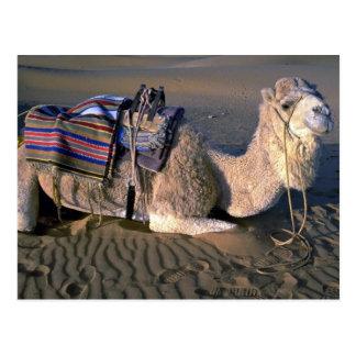 Sahara Desert near Merzouga, Morocco Postcard