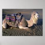 Sahara Desert near Merzouga, Morocco Poster