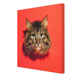 Saiberian cat gallery wrapped canvas