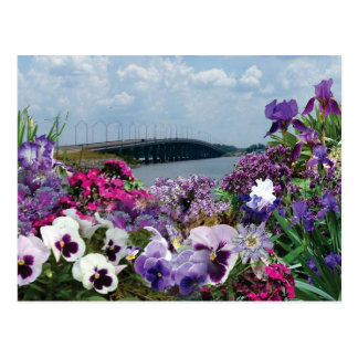 Sailboat bridge and flowers 15r1 postcard
