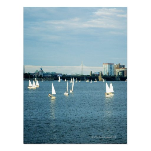 Sailboats in a river, Charles River, Boston, 2 Postcard
