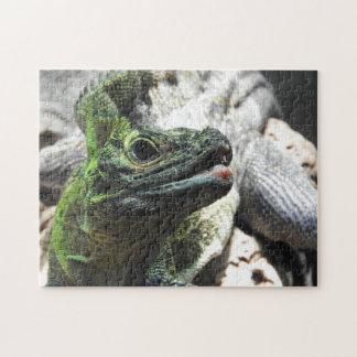 Sailfin Lizard Puzzle