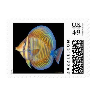 Sailfin Tang Aquarium Fish Postage