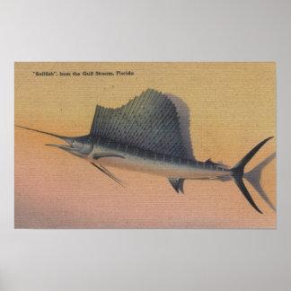 Sailfish from Gulf Stream FloridaFlorida Print