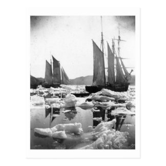 Sailing Ships in an Ice Field - 1869 Photo Postcard