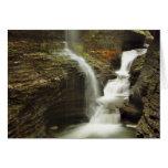 Sailor Canyon Falls Cards