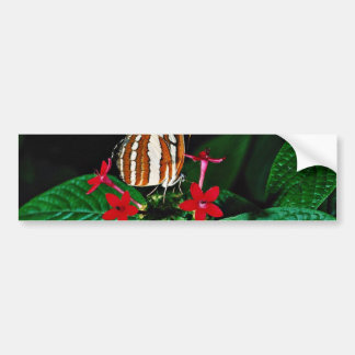 Sailor on red pentas flowers flowers bumper sticker