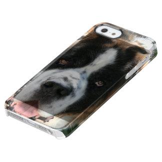 Saint Bernard Clear iPhone SE/5/5s Case