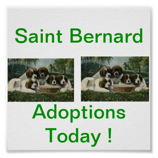 Saint Bernard Dog Adoption Today Signs Poster