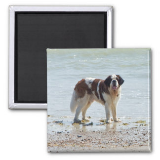 Saint Bernard dog at the beach magnet, gift idea Magnet