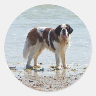 Saint Bernard dog at  the beach sticker, gift idea Classic Round Sticker