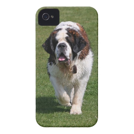 Saint Bernard dog beautiful iphone 4 case mate i/d