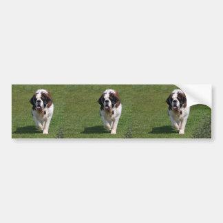 Saint Bernard dog beautiful photo bumper sticker
