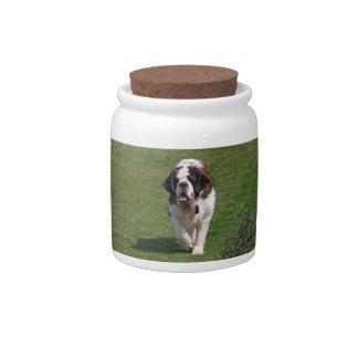 Saint Bernard dog beautiful photo cookie candy jar