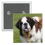 Saint Bernard dog button, pin, badge, gift idea