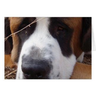 Saint Bernard Dog Greeting Card