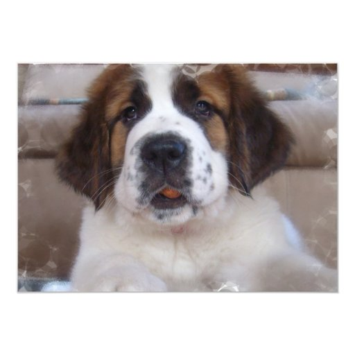 Saint Bernard Dog Invitation