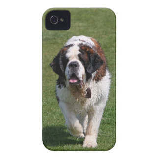 Saint Bernard dog photo blackberry bold case