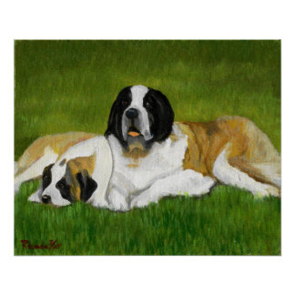 Saint Bernard Dog Portrait Poster