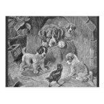 Saint Bernard Dogs and Crow Postcards
