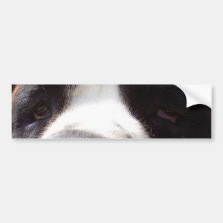 Saint-bernard eyes.png bumper sticker