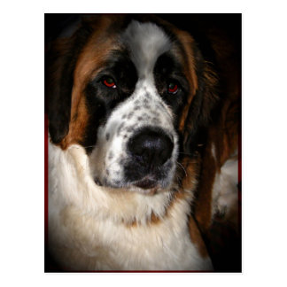 Saint Bernard Postcards 2