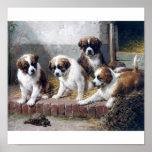 Saint Bernard puppies and turtle Poster