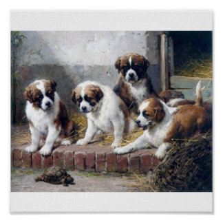 Saint Bernard puppies and turtle Poster
