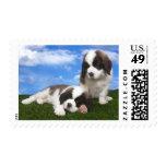 Saint Bernard Puppies Dog US Postage Stamps
