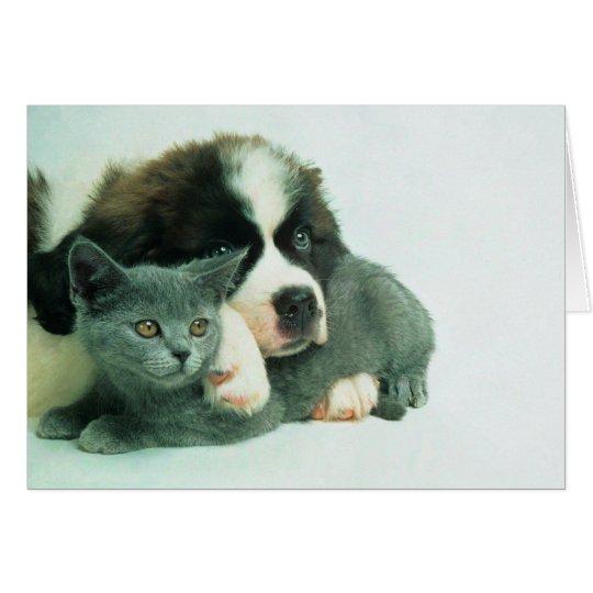 Saint bernard puppy and cat card